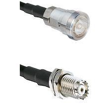 7/16 Din Female Connector On LMR-240UF UltraFlex To Mini-UHF Female Bulkhead Connector Coaxial Cable