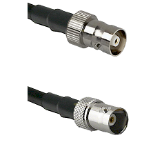 C Female on LMR100 to BNC Female Cable Assembly