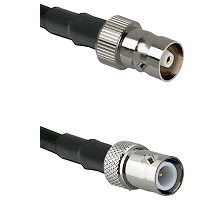 C Female on LMR100 to BNC Reverse Polarity Female Cable Assembly