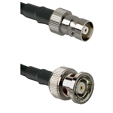 C Female on LMR100 to BNC Reverse Polarity Male Cable Assembly