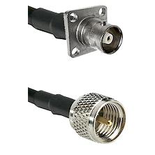 C 4 Hole Female on RG58C/U to Mini-UHF Male Cable Assembly