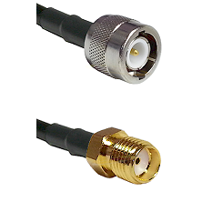 C Male on LMR100 to SMA Reverse Thread Female Cable Assembly