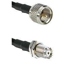 Mini-UHF Male Connector On LMR-240UF UltraFlex To Mini-UHF Female Bulkhead Connector Coaxial Cable A