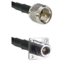 Mini-UHF Male Connector On LMR-240UF UltraFlex To N 4 Hole Female Connector Cable Assembly