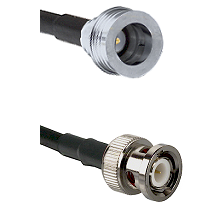 QN Male on RG142 to BNC Male Cable Assembly
