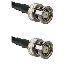 BNC Reverse Polarity Male on Belden 83242 RG142 to BNC Reverse Polarity Male Cable Assembly
