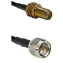 SMA Reverse Polarity Female Bulkhead on RG142 to Mini-UHF Male Cable Assembly