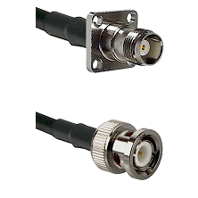 TNC 4 Hole Female on LMR100 to BNC Male Cable Assembly